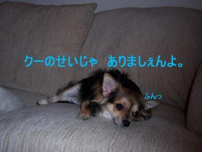 101_2312.jpg