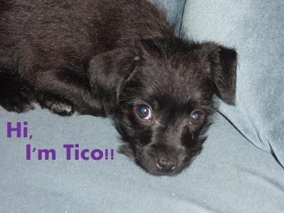 tico 002