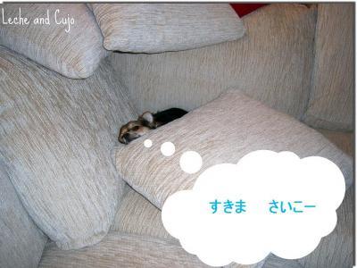 cujotosukima.jpg