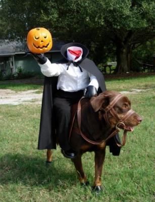 halloween-dog-729524.jpg
