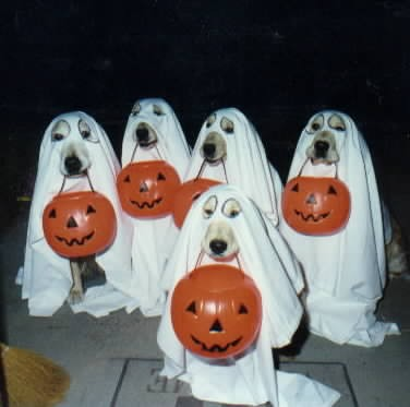 halloween_costume_dog.jpg