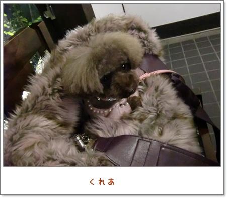 140_20110120215106.jpg