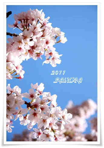 16_20110413100427.jpg