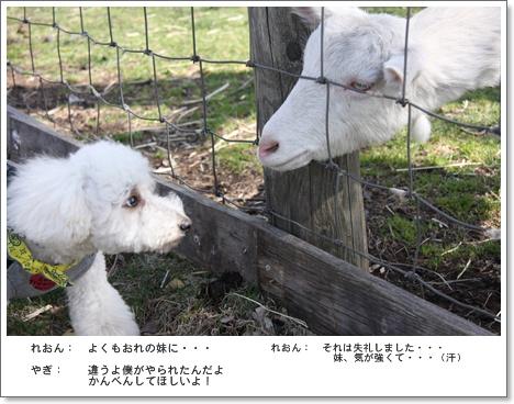 96_20110521004932.jpg