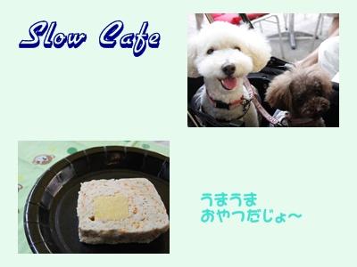 cats_20100920214437.jpg