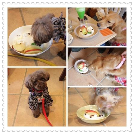 cats_20101022013100.jpg