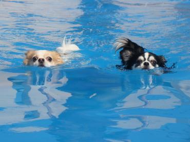 プールに放れば自然と泳ぐ♪