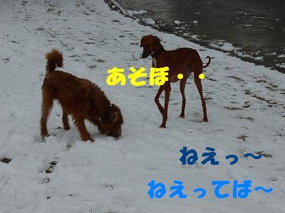 20060310184301.jpg
