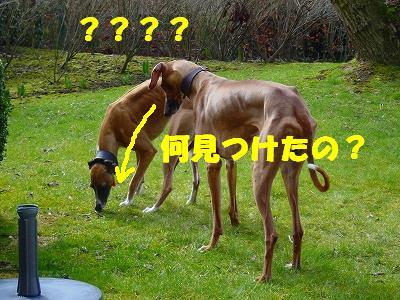 20060328013759.jpg