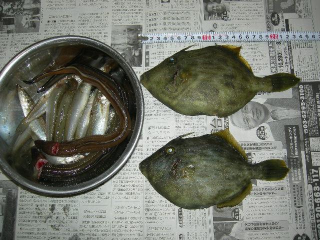 20100504釣果
