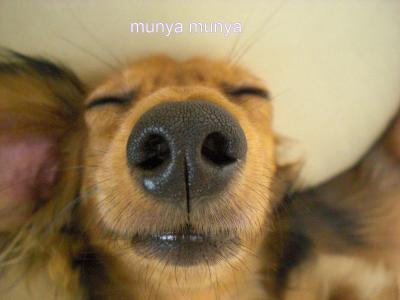 munyamunya_convert_20080909212034.jpg