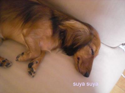suyasuya_convert_20080909211902.jpg