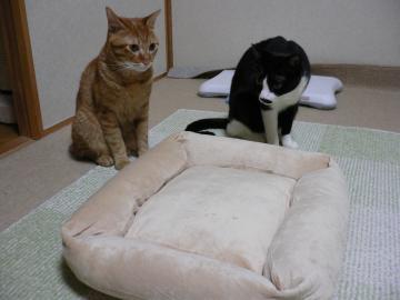 ベッドとマオ族