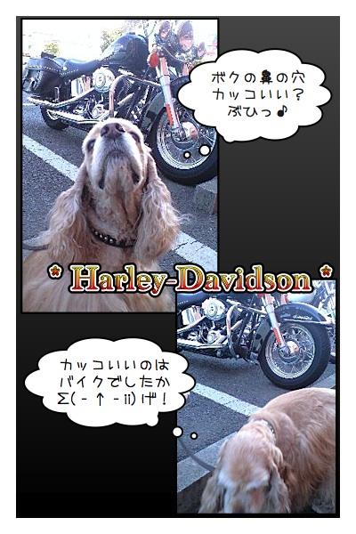 diary080309.jpg