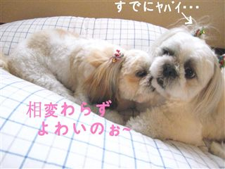 yowai_R.jpg