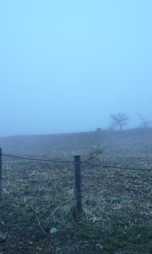 霧の野反湖w
