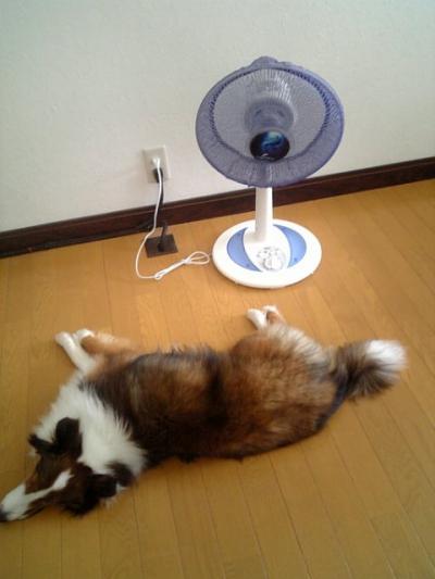 暑い1090806_112453_convert_20090808101909