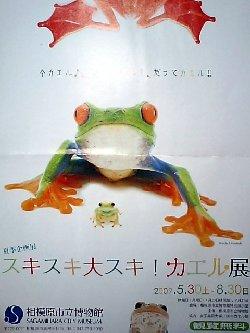 カエル展チラシ