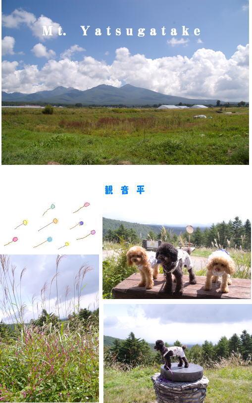 04・観音平&八ヶ岳連邦
