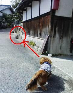 猫と遭遇①