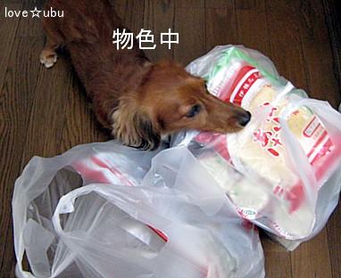 買い物袋を物色中①