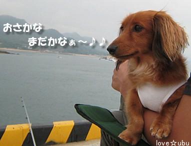 魚待ちのうぶ