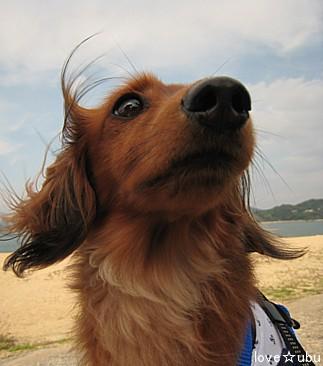 海の公園④