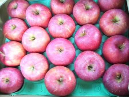 りんご 日記用