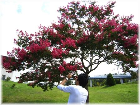 赤い花の木