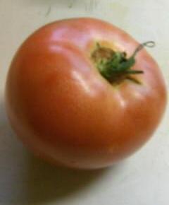 スパゲティ・アッラ・ボロネーゼ3