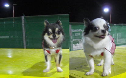 dogナイター