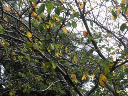 色を変えていく木々・・・。