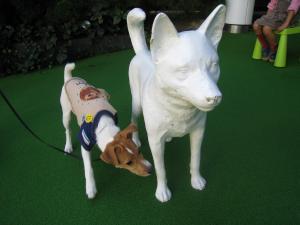 おかじゅ犬1