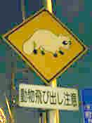 tanuki2.jpg