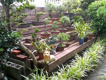 bonsai002.jpg