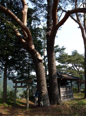 5樹を抱く