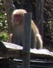 2見張り猿