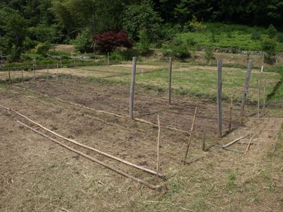 8雑穀豆畑