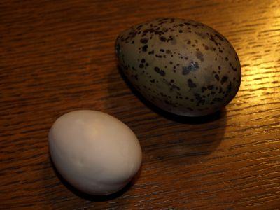 8かもめ卵