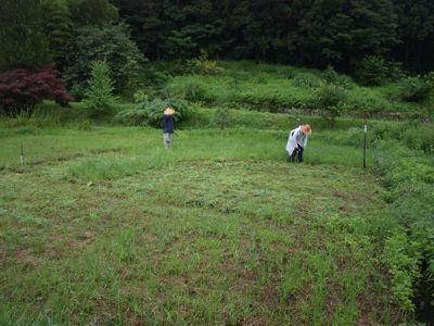 3草刈り後