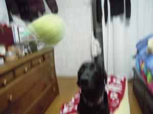 雨の日のボール2