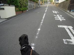 散歩だ散歩
