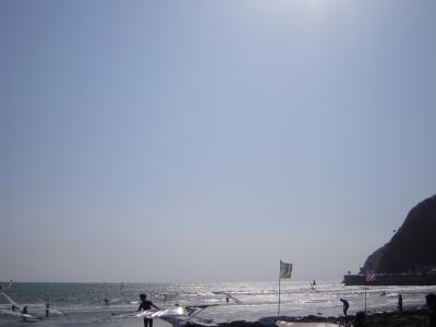 チャリティー海7