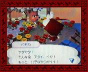 NEC_0004_20080131182843.jpg