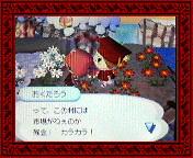 NEC_0005_20080120193041.jpg