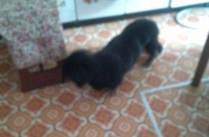 逃げる黒娘犬
