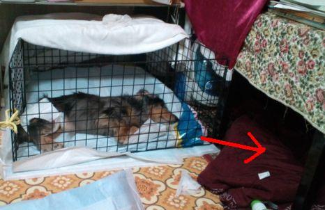 娘犬の寝てる場所