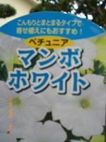 繝槭Φ繝彑convert_20090424140805