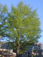 icho_convert_20090427191334.jpg