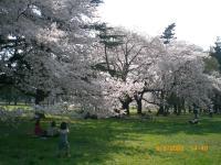 ohanami-park.jpg